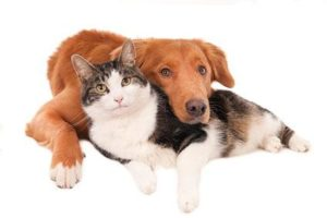 Animals Healing Homeopathy
