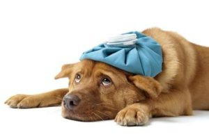 alternative treatment for pets