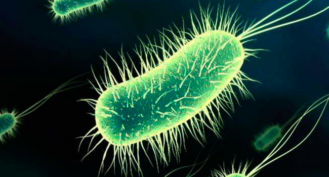 Produce E Coli Bacteria and You
